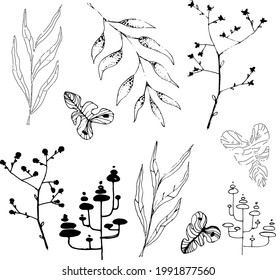 A selection of plants in black and white