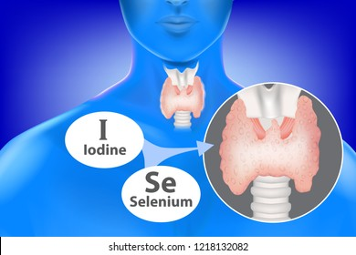 selenium and iodine necessary normal functioning of the thyroid gland