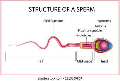 The semen of men tells each sperm part in 3D.