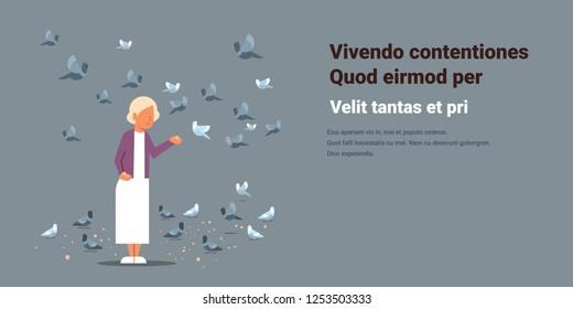 senior woman feeding flock of pigeon grandmother elegant female cartoon character horizontal copy space flat