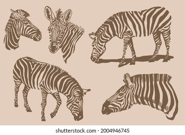 Sepia illustration,graphical vintage collection of zebras