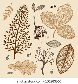 sepia plants set