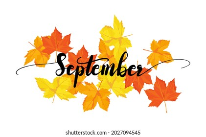 September greeting card template. Autumn leave with September lettering. Red orange and yellow leave  in autumn season in vector illustrative