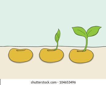 Sequence of bean seeds germination vector illustration