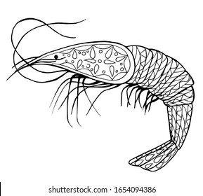 series of marine life. shrimp. coloring book for adults. Zen coloring book. handmade drawing. Isolated on a white background.
