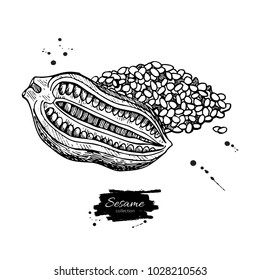 Sesame nut and seed vector drawing. Hand drawn food ingredient. Botanical sketch of herb. Agriculture grain engraved object. Culinary condiment. Great for packaging design, label, icon, oil jar.