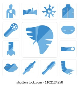 Set Of 13 icons such as Human Liver, Foot Bones, Three Bacteria, Muscle, Lips, Toe, Nostril, Mouth Open, Muscle Fiber, web ui editable icon pack, pixel perfect