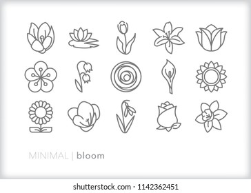 Set of 15 minimal bloom icons of flowers, petals and stems from a garden or to make a bouquet including rose, daisy, lily, tulip, lily pad, sunflower, bluebell, freesia and more
