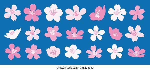 Set of 21 cherry blossom vector illustrations - Sakura