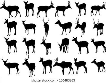 Set of 24 vector silhouettes of deer