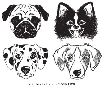 A set of 4 dog's faces: Pug, Chihuahua, Dalmatian and a mutt. Black and white vector sketches.