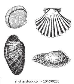 set of 4 hand-drawn shells