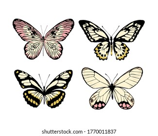 Set of 4 realistic butterflies made in the same style. Vector illustration