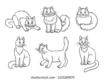 Set of 6 cats in contours - vector illustration. EPS8