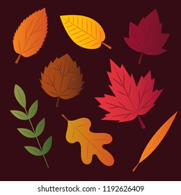 Set of 8 vector autumn leaves in various shapes and colors