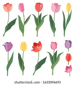 Set of 9 pink, lilac, purple, red and yellow  tulips and 3 flower buds. Vector elements isolated on white background.