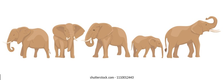 Set from African elephants in different poses. Wild animals of Africa and India. Vector illustration, isolated on white background.