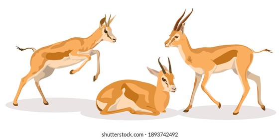 Set of african wild black-tailed gazelles with long horns, animal realistic and cartoon design, flat vector illustration on white background, in different poses, antelope
