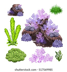 The set of algae, corals and underwater rocks isolated on white background. Vector illustration.