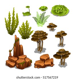 The set of algae and underwater rocks isolated on white background. Vector illustration.