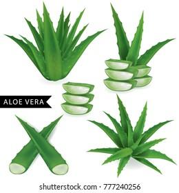 Set of aloe vera vector illustration