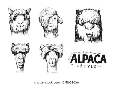 Set of alpaca heads. Hand drawn vector llustration