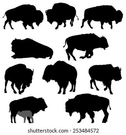 Set of American Bison Silhouettes- Vector Image