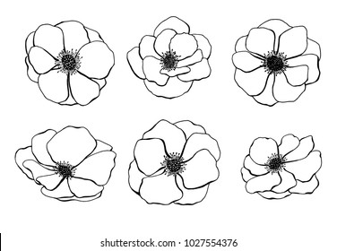 Set of anemone flower hand drawn on white background. Vector illustration.eps10