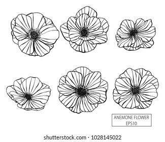 Set of anemone flowers hand drawn. Vector illustration. eps10