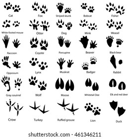 Set of animal and bird trails with name