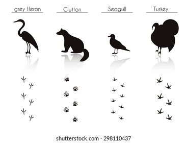 Set of Animal and Bird Trails with Name.Vector Set of Black Forest Animals and Birds Silhouettes: grey Heron, Glutton, Seagull, Turkey. Hand Drawn Vector Illustration.