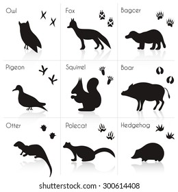 photo regarding Free Printable Forest Animal Silhouettes referred to as Animal Footprints Illustrations or photos, Inventory Pictures Vectors Shutterstock