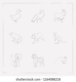 Set of animal icons line style symbols with marmoset, wolf, frog and other icons for your web mobile app logo design.