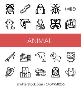 Set of animal icons such as Sap beetle, Monkey, Centipede, Dolphin, Wise, Butcher, Cockroach, Butterfly, Fishbone, Cave painting, Fishing rod, Marlin, Mutton, Hospital , animal