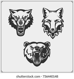 Set of animals. Bear, wolf and fox.
