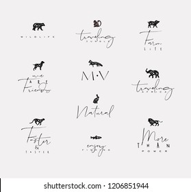 Set of animals mini floral graphic signs bear, fish, monkey, fox, pig, dog, rabbit, elephant, cheetah, lion with lettering drawing on dirty background