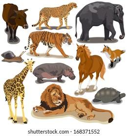 Set with animals on white background