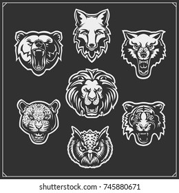Set of animals: tiger, owl, fox, lion, bear, wolf, leopard.