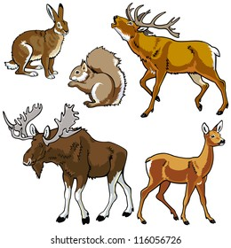 set of animals,wild beasts,forest fauna,vector images isolated on white background,Eurasia herbivore mammals