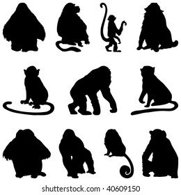Set of Apes and Monkeys Silhouettes in Different Poses. High Detail, Very Smooth. Vector Illustration.