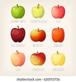 Set of apples with names. Variety of fruit for different purposes.