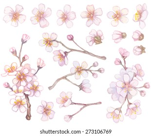 Set of apricot branches and flowers.