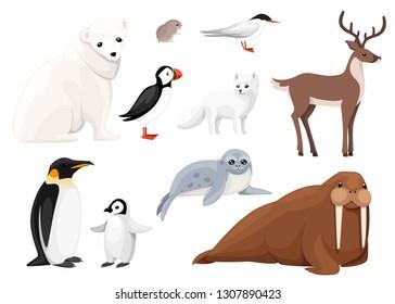 Set of arctic animals icon. Birds and mammals. Arctic animal, cartoon flat design. Vector illustration isolated on white background.