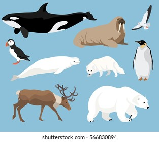 Set of arctic animals illustration in flat style, polar bear, penguin, reindeer, puffin and others