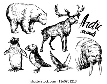 Set of arctic animals: reindeer, polar bear, walrus, penguin. Hand drawn vector illustration