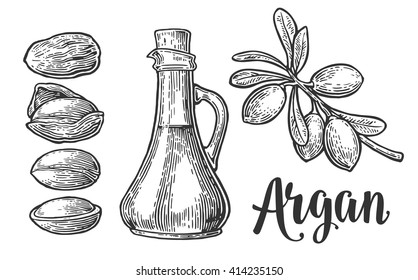 Set of argan branches, leaves, nuts. For packing oil creams. Vector vintage engraved illustration isolated on white background