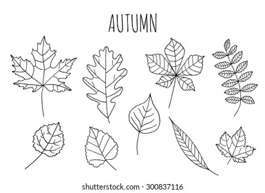 Set of autumn fall elements. Background with leaves. Set leaf sketch. Autumn doodle set. Hand draw leaves. Set of leaves sketch for you design