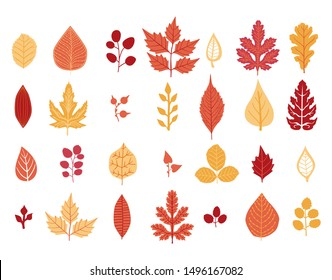 Set of autumn leaf. Autumn leaves collection. Yellow autumnal garden leaf, red fall leaf and fallen dry leaves. Botanical forest plants or september october tree foliage. Flat isolated vector symbols