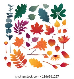 Set of autumn leaves. Design elements of red color for the autumn season. Silhouettes of maple leaf, oak leaf, sea buckthorn and physalis. Organically natural branches and plants. Vector