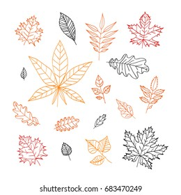 Set of autumn leaves. isolated elements on white background